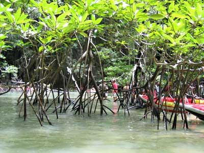 Ein Mangrovenwäldchen inmitten in einer Insel
