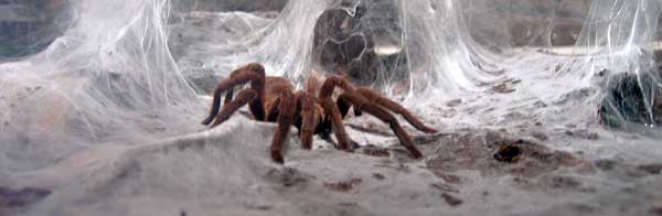 img_2288_spider.jpg